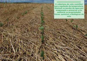 Plantas de Cobertura de Solo e adubaçao verde 2