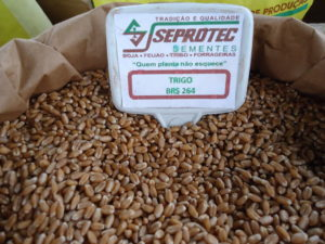 Sementes de trigo brs 264