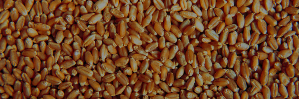 A Seprotec é uma empresa especializada na produção e comercialização de sementes de Soja, Feijões, Trigo, Adubação Verde e Forrageiras  de alta qualidade.