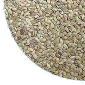 semente PENSACOLA2