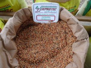 sementes de crotalaria Ochroleuca