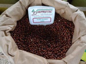 sementes de feijão gandu anão
