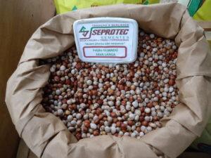 sementes de feijão gandu fava larga